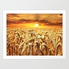 Sunset Wheatfield Art Print