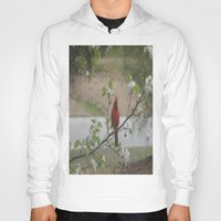 cardinal Hoodies featuring Cardinal  by Earth'sAnimalActivist23