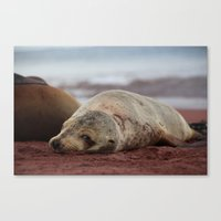 seal Canvas Prints featuring Seal by EddieF