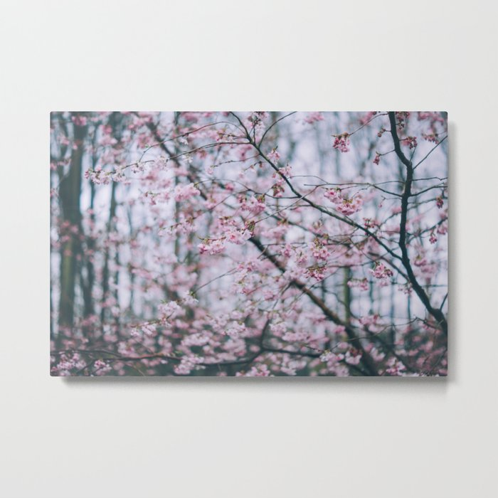 Cherry Blossom forest Metal Print