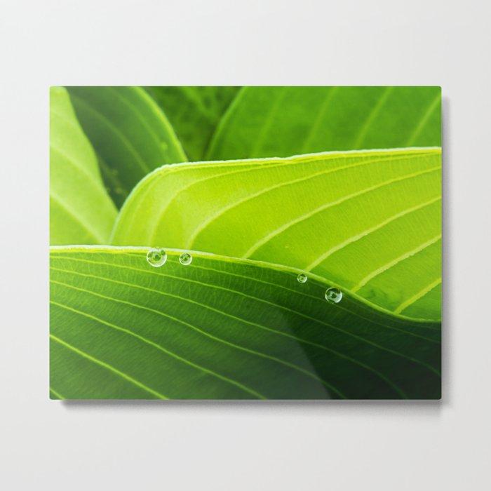 layers of green Metal Print