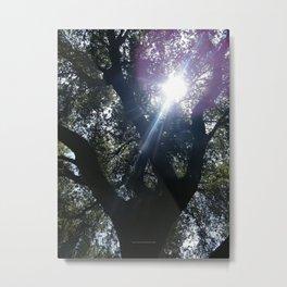 Treason TreeSun Metal Print