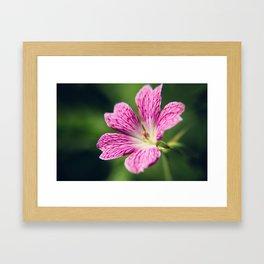 Latticework Framed Art Print
