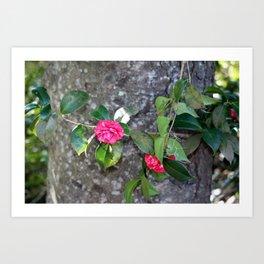 Camellia Vine Around Tree Art Print