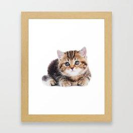 Lonely Kitten Framed Art Print