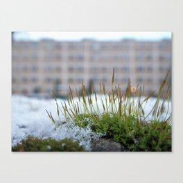 drop of life Canvas Print