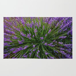 Lavender Field Of Dreams  Rug