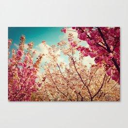 Sakura, Cherry Blossom Canvas Print