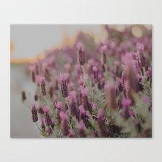 Lavender Stories Canvas Print