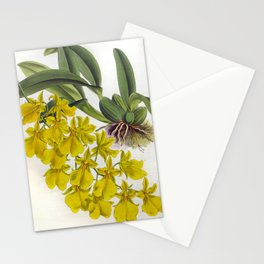 Little Yellow Vintage Orchids Lindenia Collection Stationery Cards