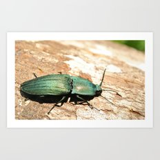 Bug on a Log Art Print