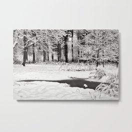 In the winter woods Metal Print