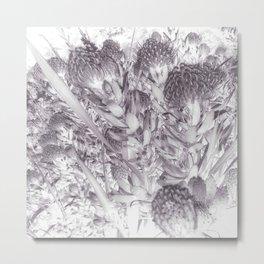 Silver Pincushion Protea Metal Print