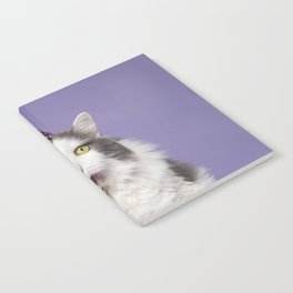 Happy Birthday Fat Cat In Party Hat With Cake Notebook