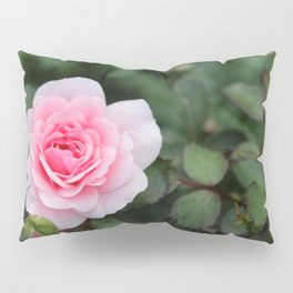Soft Pink Rose off set Pillow Sham