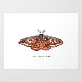 Small Emperor Moth (Saturnia pavonia) Art Print