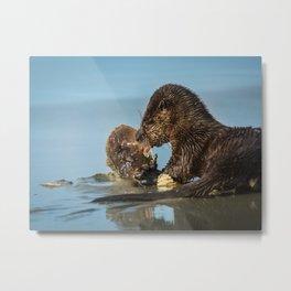 River Otter Meets Crab Metal Print