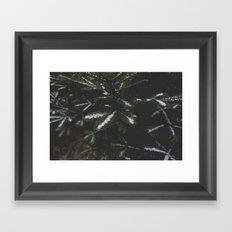 Firs. Framed Art Print