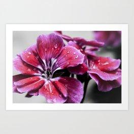 Morning Flower Art Print