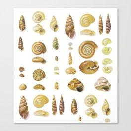 litle nature Canvas Print