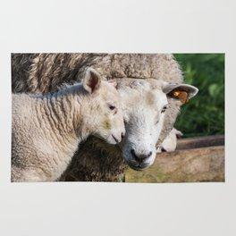 lamb Rug