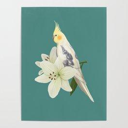 Pied Cockatiel Poster