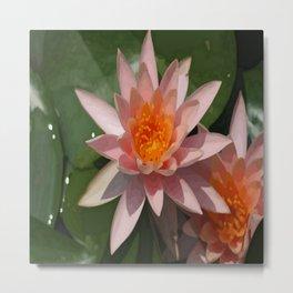Beautiful Peach Waterlily Vector Metal Print