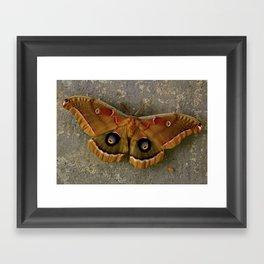 The Art of Nature Framed Art Print