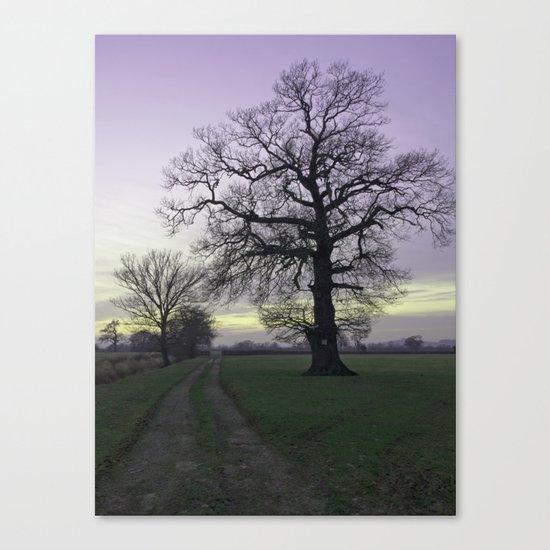 evening light... Canvas Print