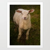 lamb Art Prints featuring Lamb by Guna Andersone & Mario Raats - G&M Studi