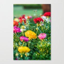 Yellow floribunda bush rose Canvas Print