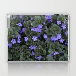 Ground Ivy Flower Laptop & iPad Skin