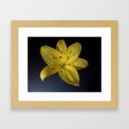 Lily Illumined Framed Art Print
