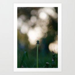 Dandelion blossom defocused Art Print