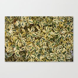 Suburban Jungle Canvas Print