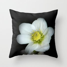 Christmas rose on black Throw Pillow