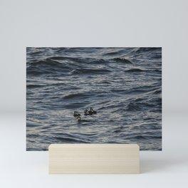 Harlequin ducks floating on Mini Art Print