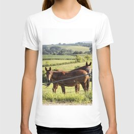 Mules gaze from opposite directions in rural Clayton County Iowa T-shirt