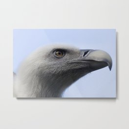 Headshot of young Griffon vulture, Gyps fulvus II Metal Print