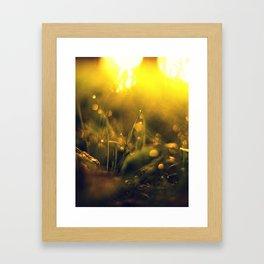 Grass Abstraction Framed Art Print