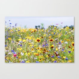 Field of flowers - Colorful - Marrum, Friesland, The Netherlands Canvas Print