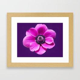 Anemone de Caen Flower Framed Art Print