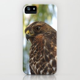 Young Red-Shouldered Hawk in a Desert Willow iPhone Case