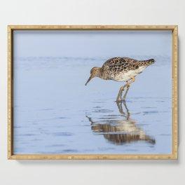 Ruff water bird (Philomachus pugnax) Ruff in water Serving Tray