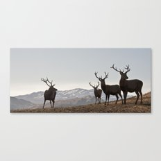 Red Stags Canvas Print