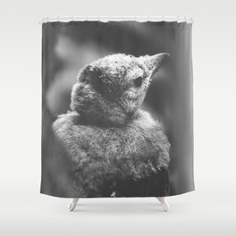 Blue Jay Fledgling Black and White Photography Shower Curtain