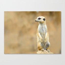 Meerkat on guard Canvas Print
