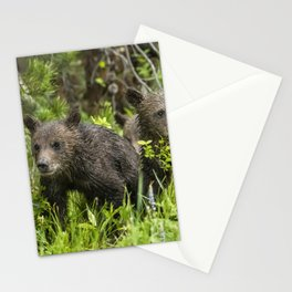 Grizzly 399's Cubs, No. 2 Stationery Cards