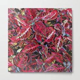 Red Tropical Croton Leaves Plant Metal Print