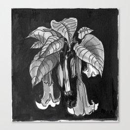 Poisonous Plants: Brugmansia (Angel's Trumpet) Canvas Print